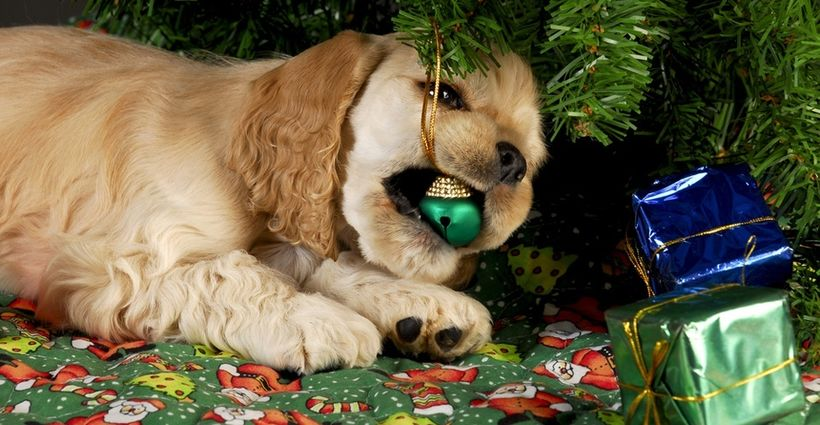 Safety First for Pets During the Holidays