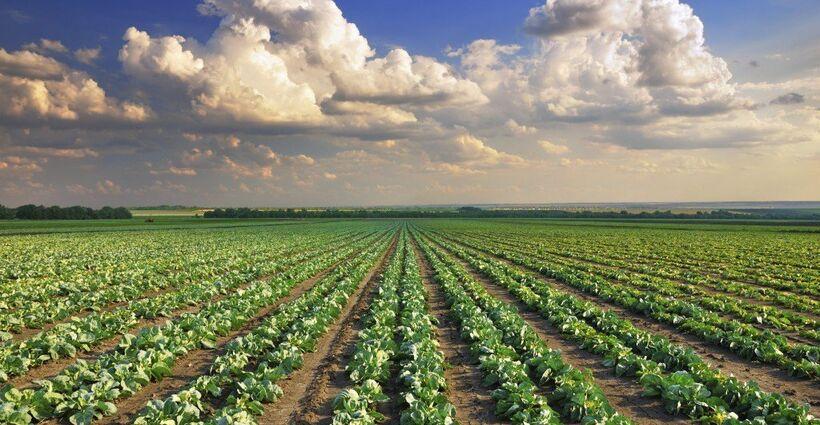 Conflicting Regulatory Requirements Concerning Pesticides